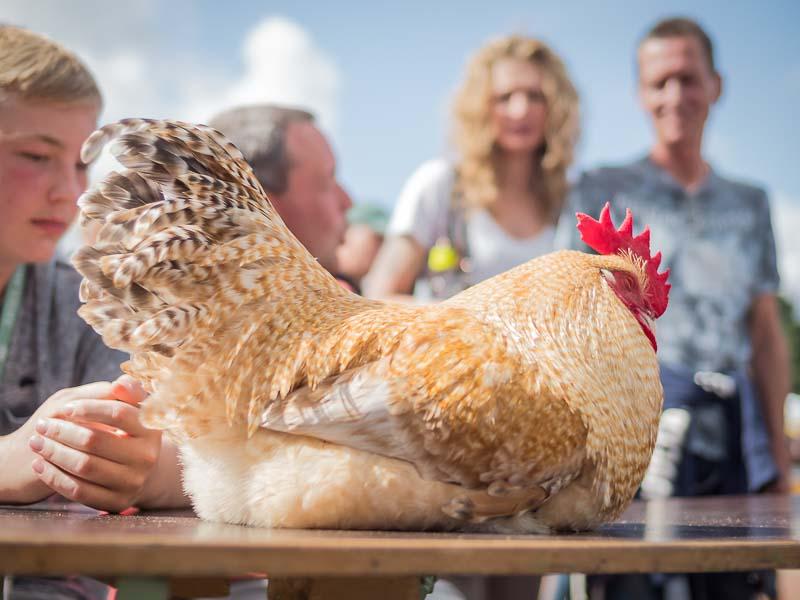 Die Hühner haben Hitzefrei auf dem Weyher Bio-BBC 2019