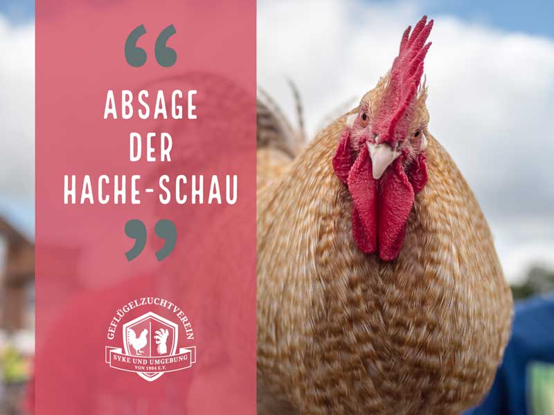 Absage der 46. Hache-Schau – Geflügelausstellung findet coronabedingt nicht statt